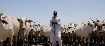 14. Patriot Alert 10: The Nigerian Farmer, The Nigerian Herder, And Peaceful Coexistence.